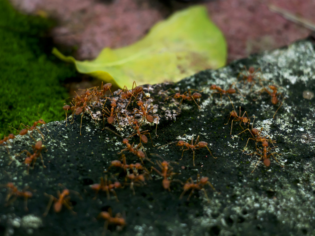 Eliminate Fire Ants On Your Property
